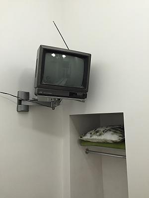 Mini apartment, Studio, 003