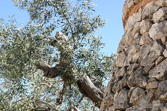 Estate near Gallipoli, One Bedroom (48878), 029