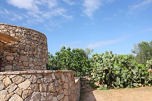 Trullo surrounded by olive trees, Un chambre, 004