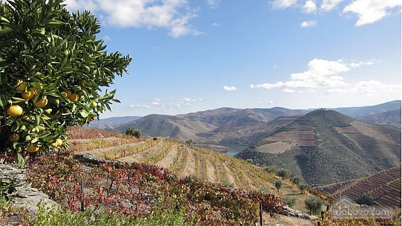 Casa Vineyard em Pinhao-Douro, Trois chambres (69687), 004