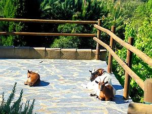 Masia Can Bavi Costa Maresme, Quatre chambres, 035