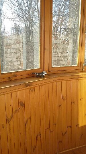 Cozy apartment in Kiev, Studio, 009