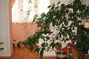 Cozy apartment on Kievskaya, One Bedroom, 005